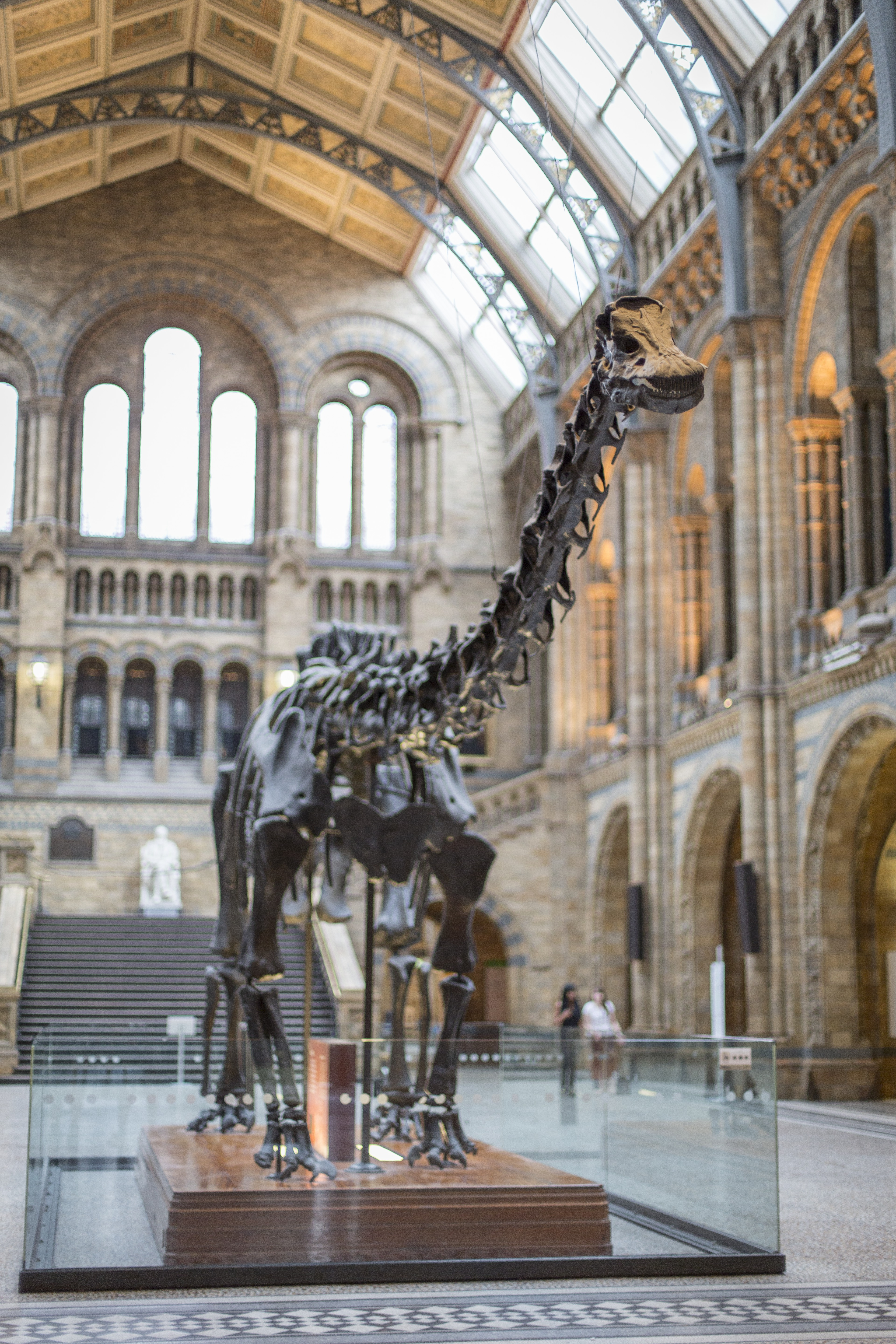 Dippy (c) Trustees of the Natural History Museum