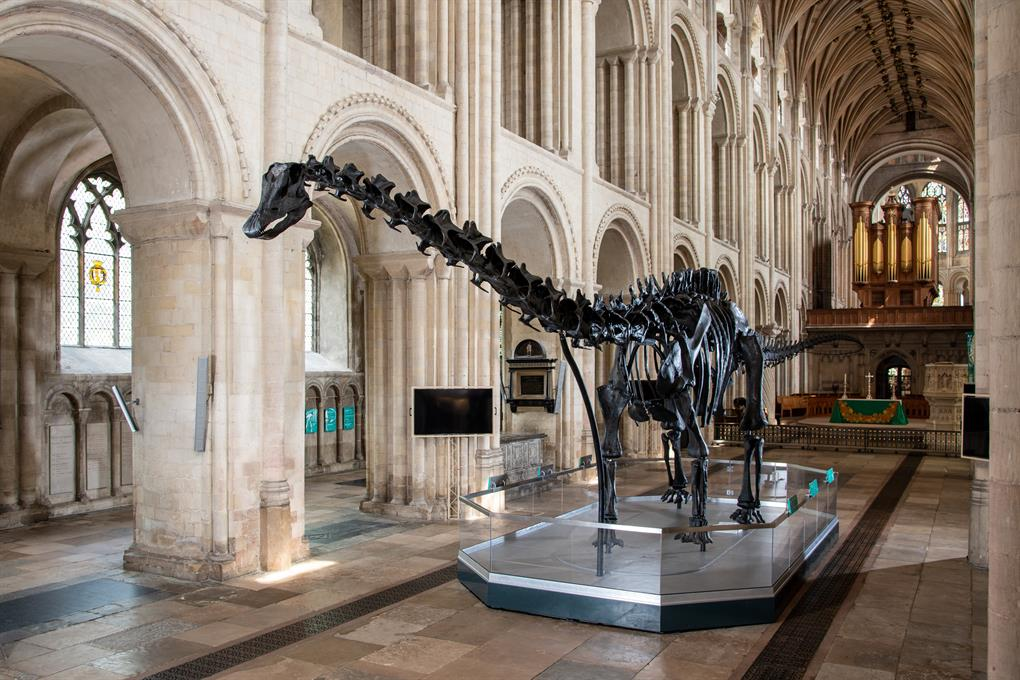 Dippy at Norwich Cathedral (c) Bill Smith_Norwich Cathedral (5)