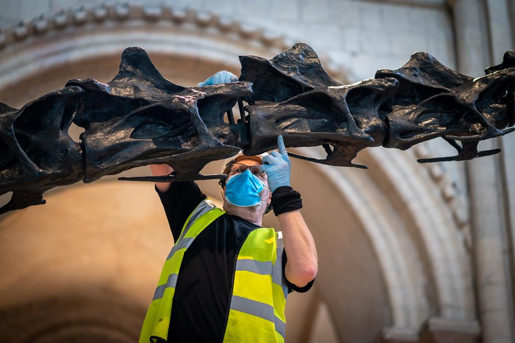 Dippy being built in the Nave